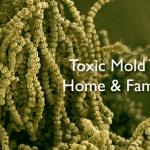 Toxic Mold Threatens Home & Family Health
